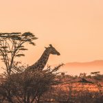 Top 10 Things to do in Kenya